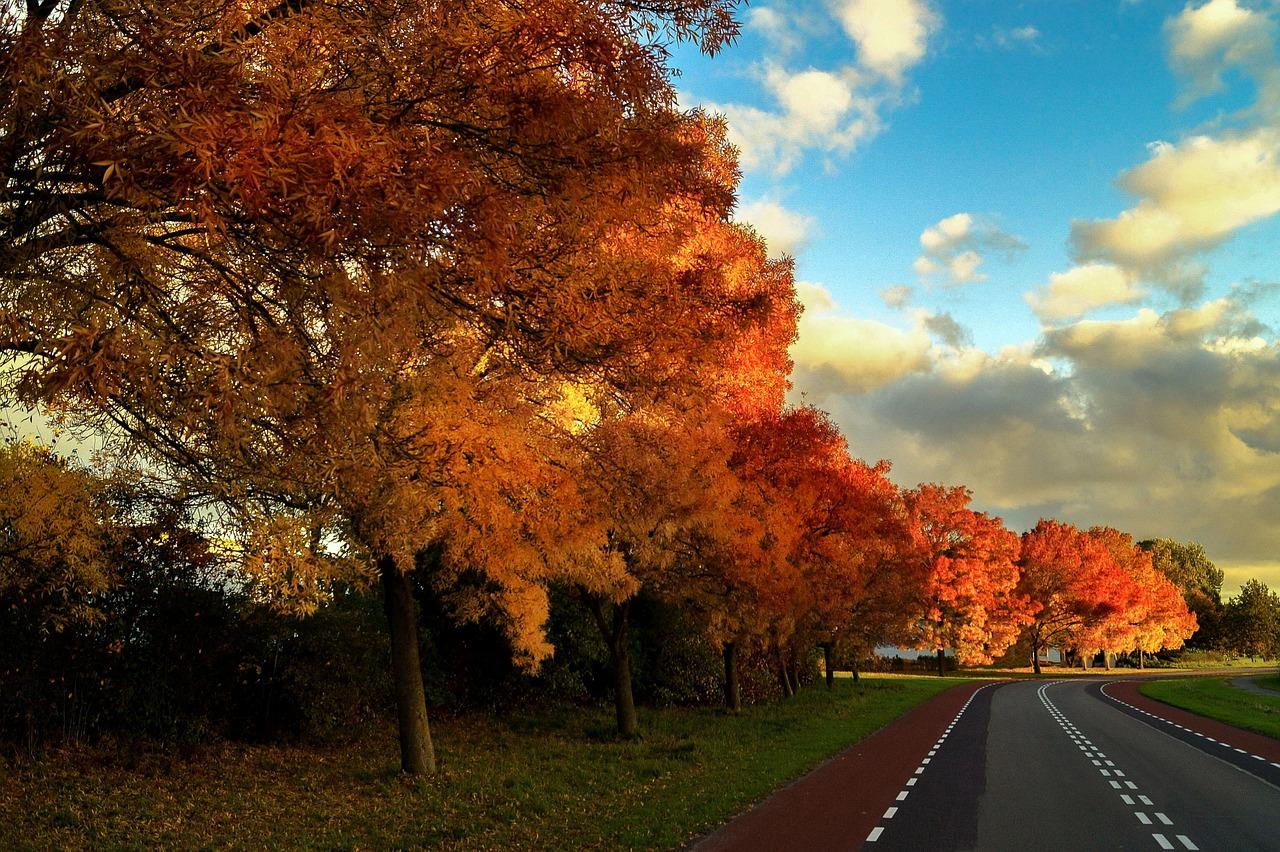 autumn-562550_1280