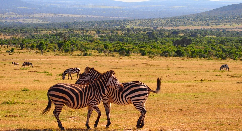 kenya-737416_960_720