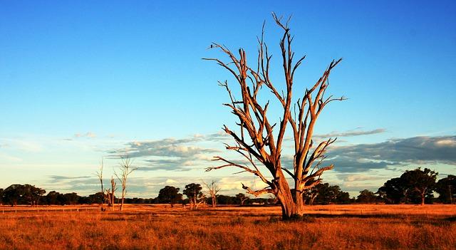 tree-392068_640