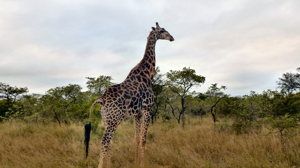 photo-safari-987505_960_720